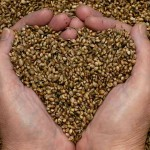 hemp-seed-oil-benefits